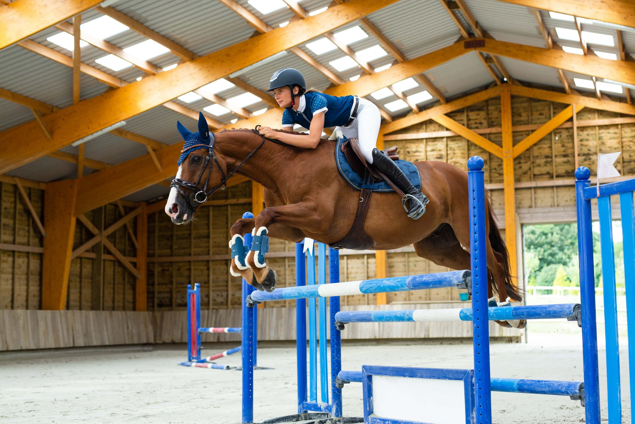 Dressage Vs Show Jumping What S More Difficult And What You Need To Know Equinavia Blog